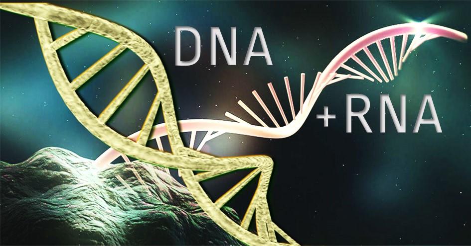 DNA RNA ALL